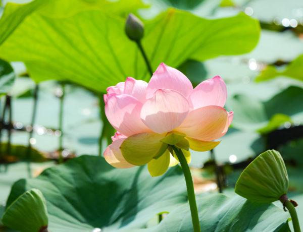 meditaties magnified healing Reiki